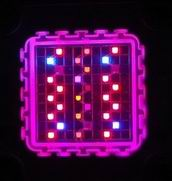 Image: Customized 100W Grow Light LED Modules Lighting Test
