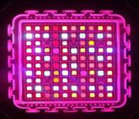 Image: Customized 300W Grow Light LED Modules Lighting Test
