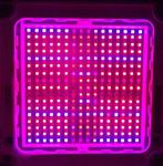 Image: Customized 600W Grow Light LED Modules Lighting Test